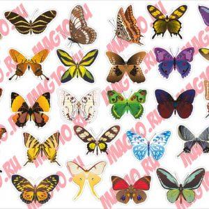 Kit 4084 Набор наклеек Бабочки